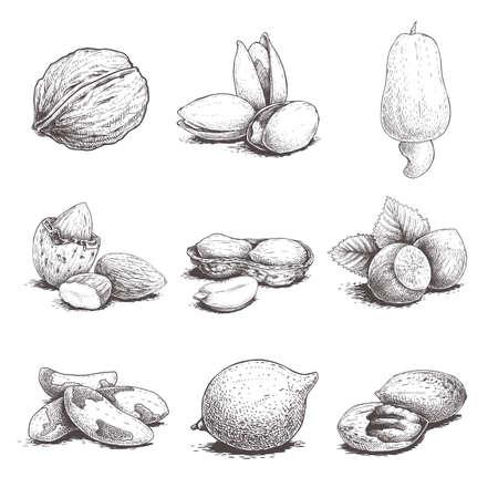 Different nuts set. Sketch style hand drawn nuts with nutshells. Walnut, pistachio, cashew, almond, peanut, hazelnut, brazil nut, macadamia and pecan. Vector illustrations. Organic food.