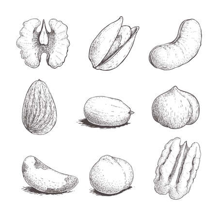 Different nuts set. Sketch style hand drawn seeds. Walnut, pistachio, cashew, almond, peanut, hazelnut, brazil nut, macadamia and pecan. Vector illustrations. Organic food.
