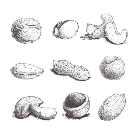 Different nuts set. Sketch style hand drawn nuts with nutshells. Walnut, pistachio, cashew, almond, peanut, hazelnut, brazil nut, macadamia and pecan. Vector illustrations. Organic food.
