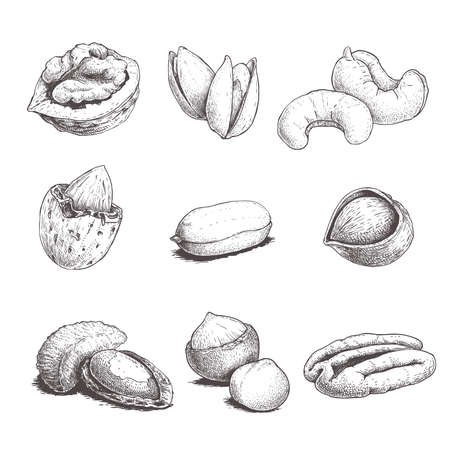 Different nuts set. Sketch style hand drawn nuts. Peeled and with nutshells. Walnut, pistachio, cashew, almond, peanut, hazelnut, brazil nut, macadamia and pecan. Vector illustrations. Organic food. Vector Illustration