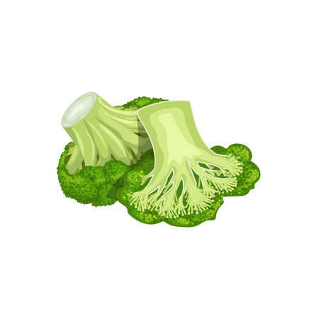 Broccoli group, whole and half. Cartoon style. Fresh farm vegetable. Eco and healthy product. Vector illustration isolated on white background.  イラスト・ベクター素材