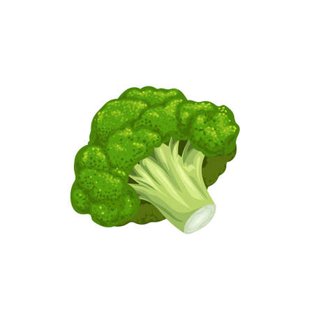 Broccoli icon in cartoon style. Fresh farm vegetable. Eco and healthy product. Vector illustration isolated on white background.
