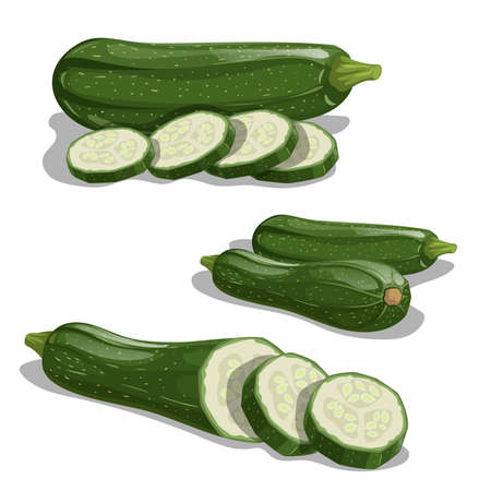 Zucchini set. Whole vegetable, cut, single and group. Farm fresh veggies ready for cook. Vector illustrations isolated on white background.