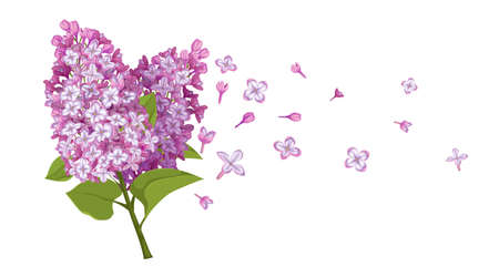 Spring flowers bouquet with flying blossoms. Lilac flower template. Ideal for packaging, invitations and greeting cards. Vector illustration isolated on white background.