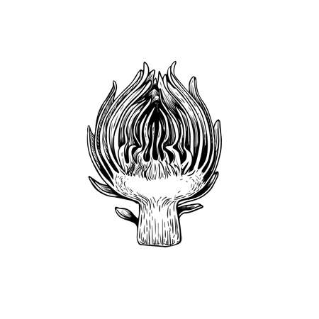 Artichoke sketch style. Half of flower. Hand drawn illustration of eco farm fresh product. Detailed drawing. Herbs vintage style illustration. Vector isolated on white background.  イラスト・ベクター素材