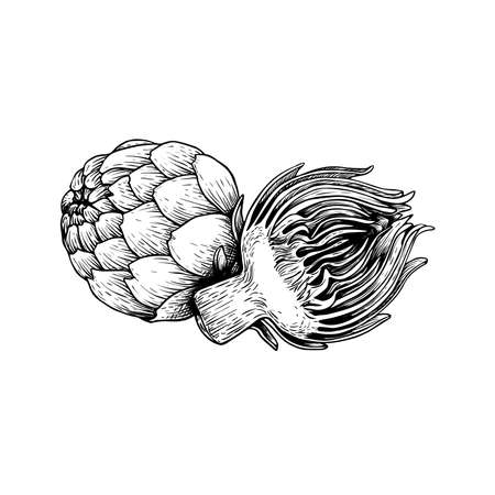 Artichokes group sketch style. Hand drawn illustration of eco farm fresh product. Detailed drawing. Herbs vintage style illustration. Vector isolated on white background.