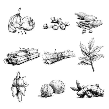 Spices, herbs and condiments set. Garlic, cloves, coriander, cinnamon sticks, liquorice root, bay leaves, chili peppers, nutmegs and ginger root. Sketch hand drawn style. Vector illustrations.