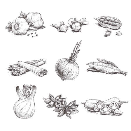 Spices, herbs and condiments set. Garlic, cloves, coriander, cinnamon sticks, onion, bay leaves, fennel, star anise and chili pepper. Sketch hand drawn style. Vector illustrations.
