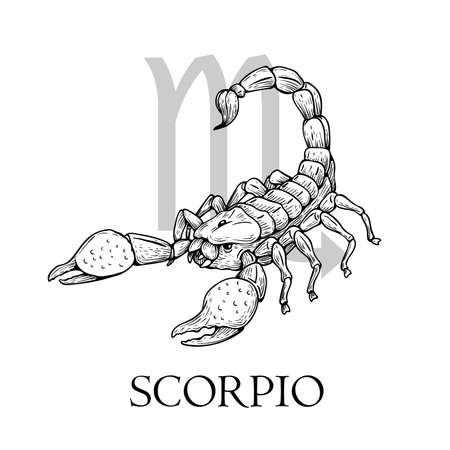 Hand drawn Scorpio. Zodiac symbol in vintage gravure or sketch style. Old-fashioned scorpion in attack pose. Retro astrology constellation mysterious illustration isolated on white.