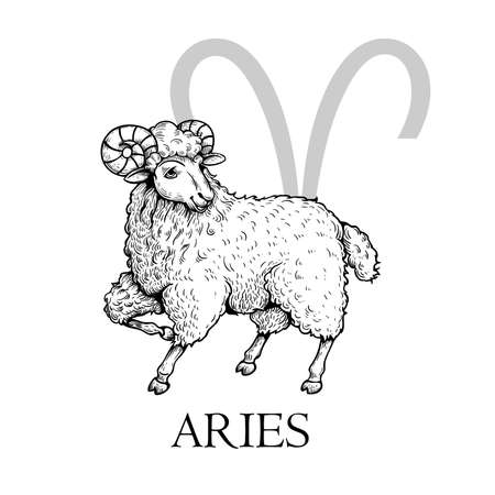 Hand drawn Aries. Zodiac symbol in vintage gravure or sketch style. Ram or mouflon animal standing and smiling. Retro astrology constellation drawing. 向量圖像