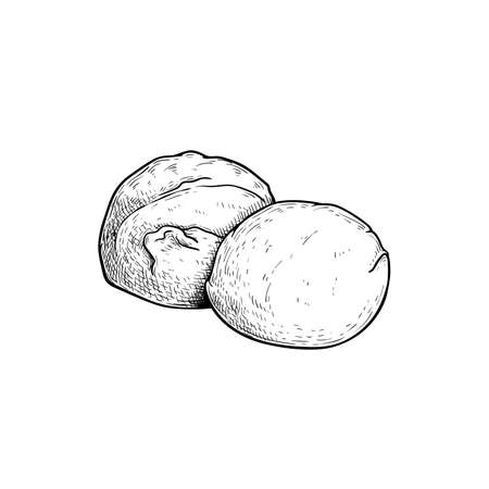 Mozzarella cheese balls. Hand drawn sketch style drawing of traditional Italian cheese made from buffalo milk. Fresh soft butter cheese. Vector illustration.