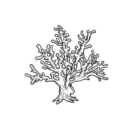 Hand drawn corals. Stylophora corals. Underwater reef element. Vector illustration isolated on white background.