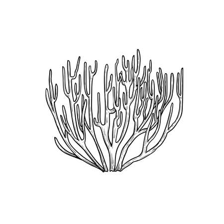 Hand drawn corals. Stag horn coral. Underwater reef element. Vector illustration isolated on white background.