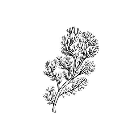Hand drawn corals. Dense feathery black coral. Underwater reef element. Vector illustration isolated on white background.