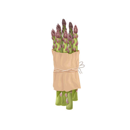 Asparagus green sprouts butch in paper pack. Healthy farm fresh vegetable. Vegetarian eco food. Isolated on white background. Vector illustration.