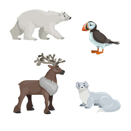 Arctic animals set. Polar bear, arctic puffin bird, reindeer and polar ermine. Cartoon flat design. Vector illustrations isolated on white background.