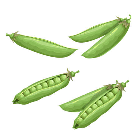 Green peas set. Eco farm fresh food. Sweet green pea pods. Closed and open. Vector illustrations isolated on white. Ilustracja