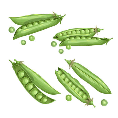 Green peas set. Eco farm fresh food. Sweet green pea pods collection. Closed and open. Vector illustrations isolated on white.