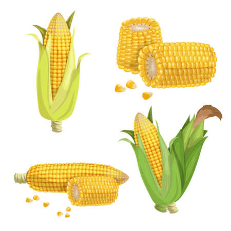 Sweet corn set. Cartoon style. Corn cobs, cuts of corn and seeds. Golden maize collection. Vector illustrations isolated on white.