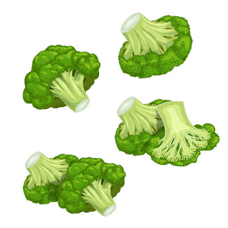 Broccoli set. Single and group, whole and cut. Farm fresh eco and healthy vegetables collection. Vector illustrations isolated on white.