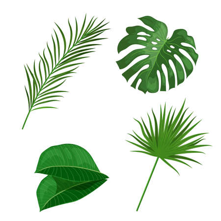 Tropical leaves set. Palm, banana, monstera and others leaves. Exotic foliage, nature botanical decorative collection. Vector illustration isolated on white background.