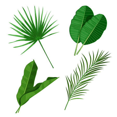 Tropical leaves set. Palm, banana and others leaves. Exotic foliage, nature botanical decorative collection. Vector illustration isolated on white background.