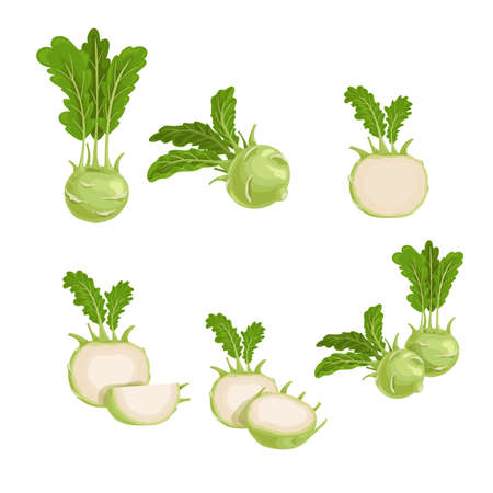 Kohlrabi set. Whole, halved and quarter. Illustrations collection of fresh farm vegetables. Eco turnip cabbage. Vector illustration for markets, prints, packages. Isolated on white background. Иллюстрация