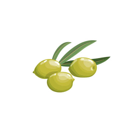 Green olives with leaves in cartoon style. Flat simple design element for packaging, logos and other olive products. Vector illustration isolated on white. Иллюстрация