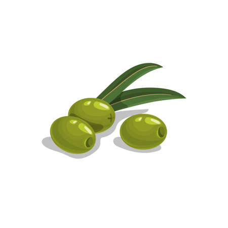 Green pitted olives with leaves in cartoon style. Flat simple design element for packaging, logos and other olive products. Vector illustration isolated on white.