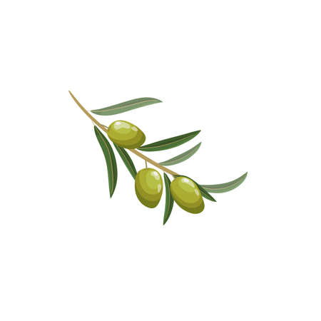 Green olive branch in cartoon style. Flat simple design element for packaging, logos and other olive products. Vector illustration isolated on white. Иллюстрация