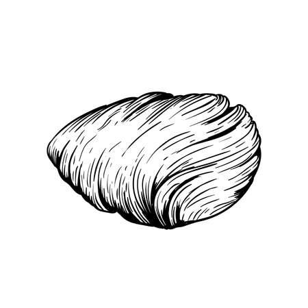 Traditional Italian dessert Sfogliatelle (Sfogliatella). Hand drawn sketch style Italian sweets illustration. Best for packaging and menu designs. Isolated on white background. Stock Illustratie