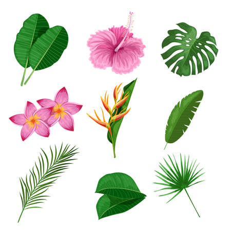 Tropical leaves and flowers set. Collection of exotic plants. Best for invitations, party designs and flyers. Vector illustrations isolated on white background.