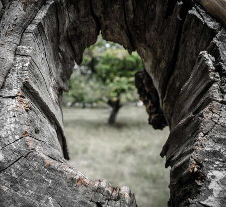 cranny: Hole in the tree Stock Photo