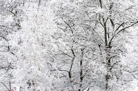 snowbound: Snowbound trees