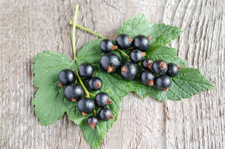 Blackcurrant photo