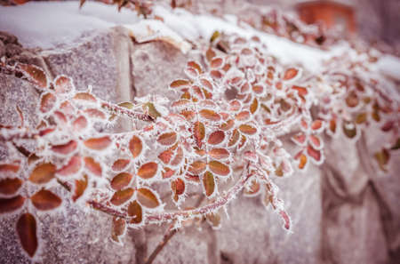 Frosted plants photo