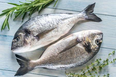 dorada: Dorada royale fish