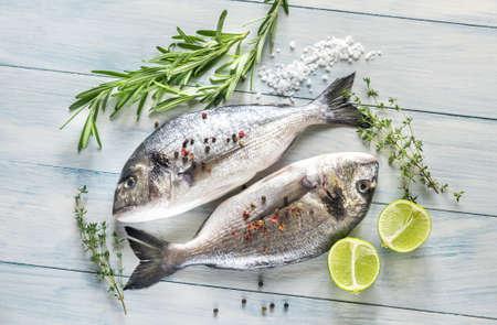Dorade Royale Fish Banque d'images