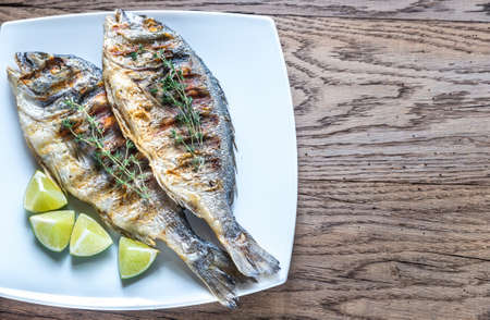gilt head: Grilled Dorade Royale Fish Stock Photo