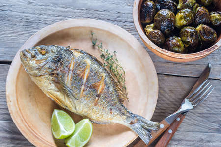 gilt head: Dorade Royale Fish Stock Photo