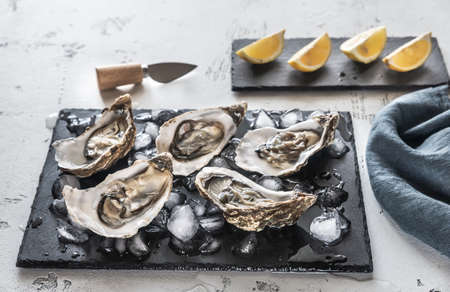 Raw oysters on the slate board close-up 写真素材