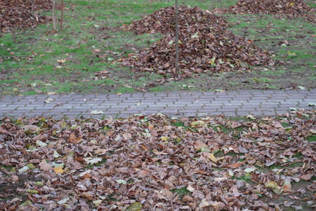 Walkway lined with tiles and fallen leaves collected in heaps, park, autumn, minimalism, background