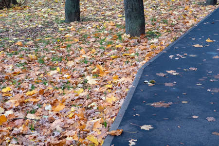 Asphalt footpath on a lawn densely strewn with fallen leaves, autumn
