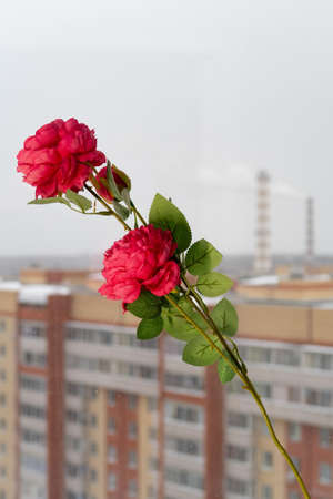 Artificial rose on the window against the background of residential buildings and smoking chimneys, quarantine