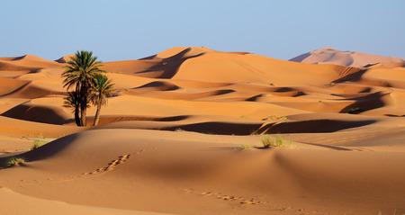 erg: Morocco. Sand dunes of Sahara desert