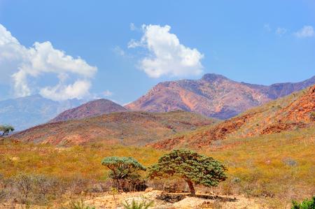 Pictorial landscape of the Socotra island,Yemen.