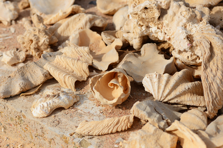Fragments of corals and shells on the coast of the Red Sea in Egypt.