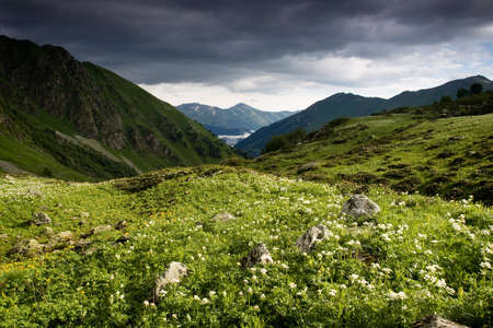 Mountain landscape with dark sky and white flowers, travel background.