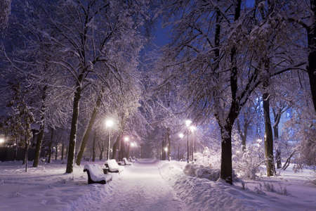 Winter park with red benches covered with snow in the evening. Stock Photo - 12361396