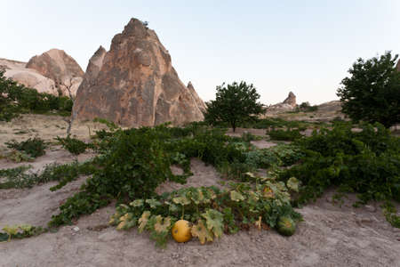 Many pumpkins in Cappadocia valley, Turkey  Stock Photo - 12822110